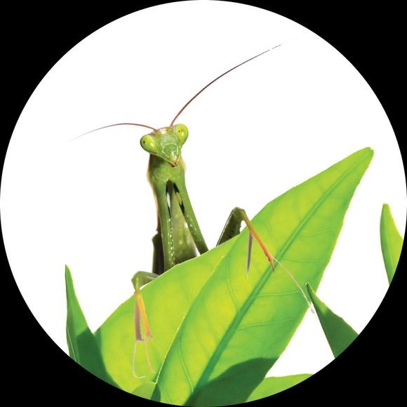 greenbug8